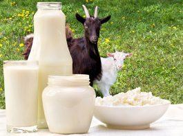 homemade goat milk formula: Try this Goat Milk formula at home!