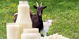 homemade goat milk formula: Try this Goat Milk formula at home!
