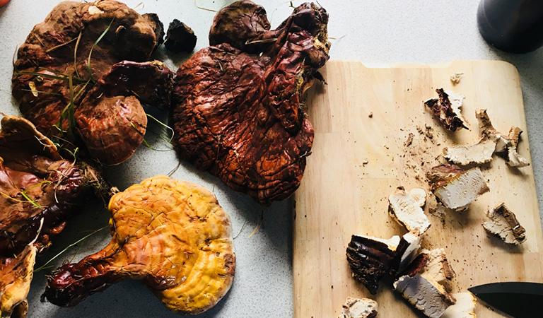 Preparing Reishi Mushroom